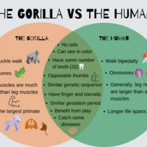 Gorilla vs Human